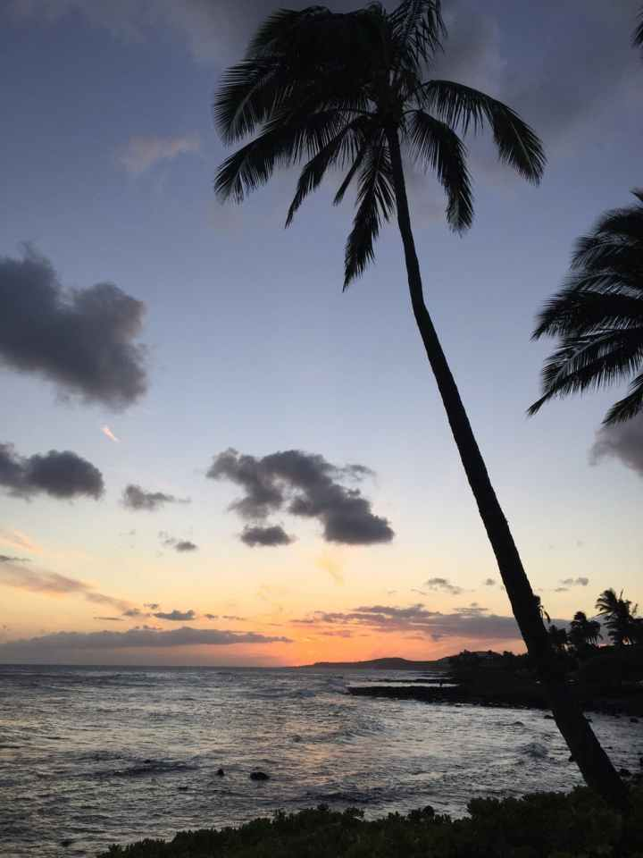 sunset beach palm trees hawaii