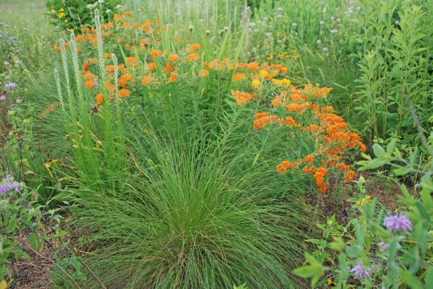 NATIVE PLANTS_photo credit Melinda Myers.jpg