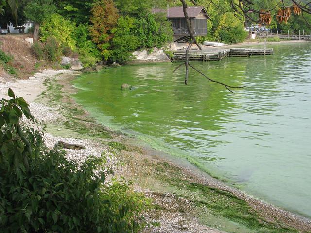 Harmful algae bloom. Kelley's Island, Ohio. Lake Erie. September 2009.