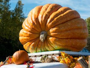 Growing Giant Pumpkins.jpg