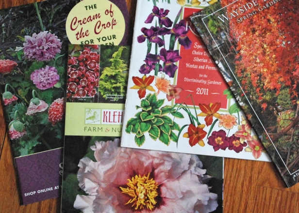 Garden Catalogs_photo credit Melinda Myers LLC.jpg